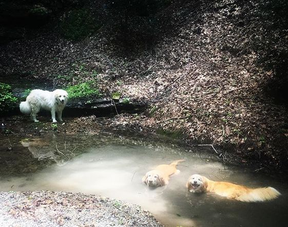 Miranda Lambert didn't travel far and wide to enjoy her summer downtime; she shared this photo of her pups playing in the water during a two mile hike on her farm in Tennessee.