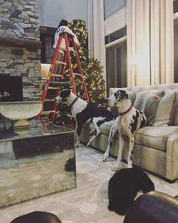 Justin Moore's family, including the dogs, is all ready for the holidays!