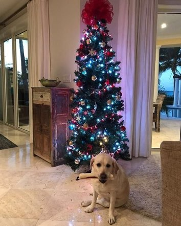 Shania Twain shared a pic of her beautiful Christmas tree and adorable dog.